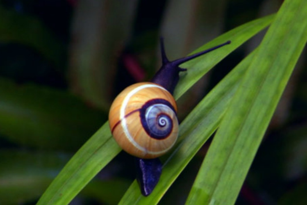 snail skincare from Korea
