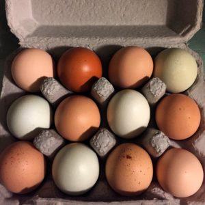 apricot-lane-farms-eggs-3-favorite-brands