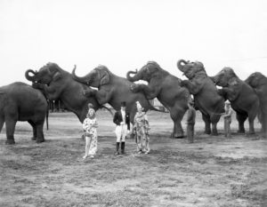 thats-marketing-circus-analogy