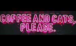 cat cafe hangouts