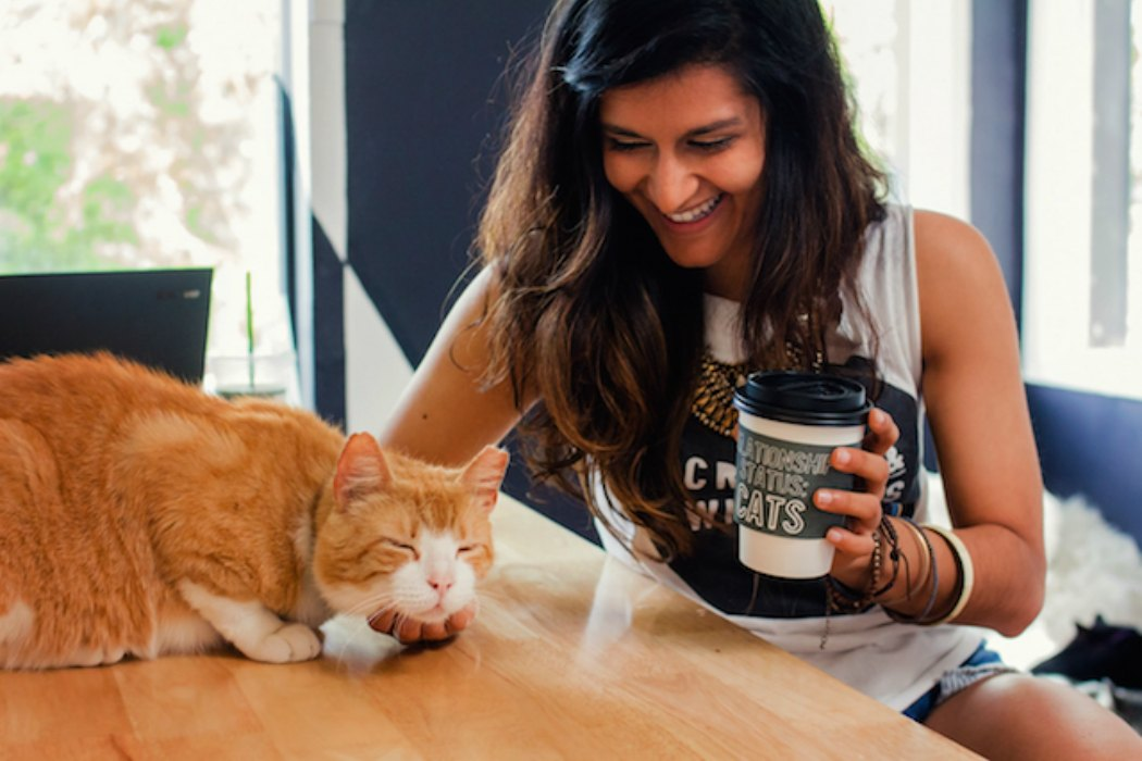 cat cafe los angeles
